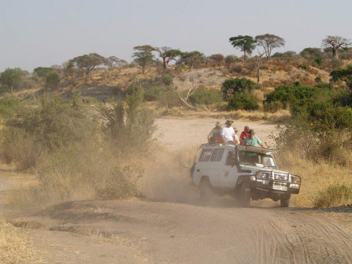 Kilimanjaro 2008. – safari